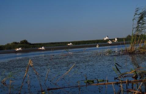 Delta Dunarii - Dunarea Veche